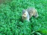 DiagSquirrelB4Storm